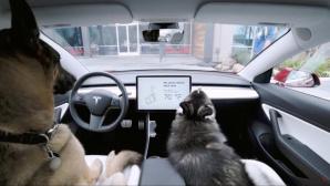 Hunde in Tesla-Fahrzeug©Tesla