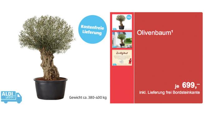 Aldi: Olivenbaum©aldi-sued.de
