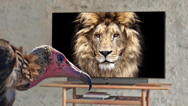 Loewe-Fernseher©iStock.com / Thoms Gallery, iStock.com/Evgeny555