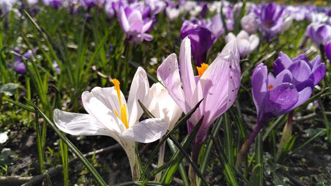 Nahaufnahme Blumen©COMPUTER BILD