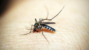 Eine Mücke©Pexels