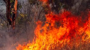 Australisches Buschfeuer©gettyimages.de / Marianne Purdie