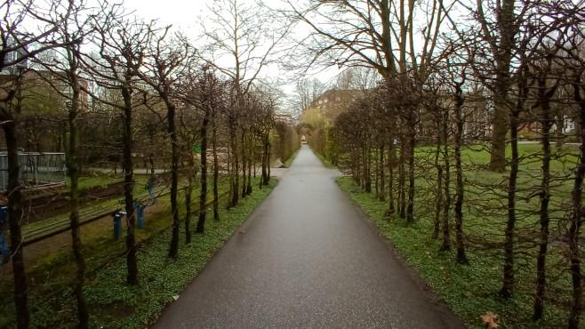 Wiko View 4 Foto: Weg mit Bäumen©COMPUTER BILD