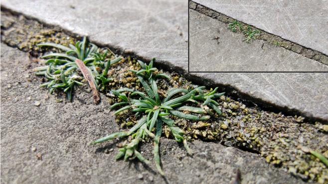 Makro-Aufnahme einer kleinen Pflanze©COMPUTER BILD