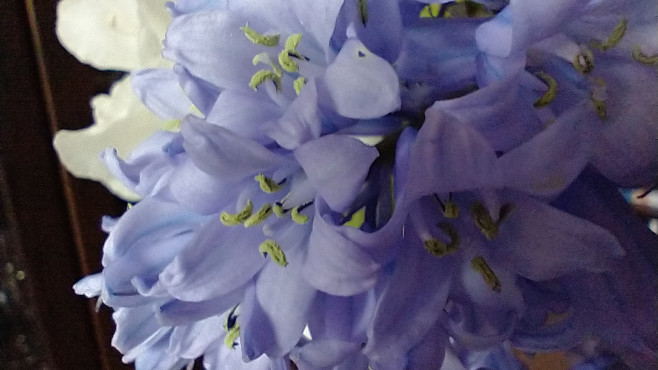 Testfoto Blüten Makro©COMPUTER BILD