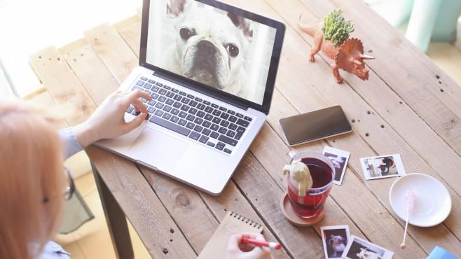 Hund auf Bildschirm©gettyimages.de / Westend61