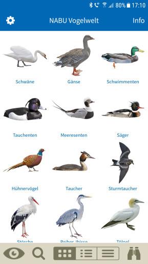 NABU Vogelwelt: Vögel entdecken und bestimmen (Android-App)