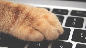 Katzenpfote auf einer Tastatur©pexels.com / ?????????? ??????????