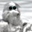 Icon - Yetisports Part 1 – Pingu Throw (Mac)