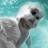 Icon - Yetisports Part 6 – Bigwave