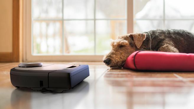 Neato D7 neben einem schlafenden Hund©Neato Robotics