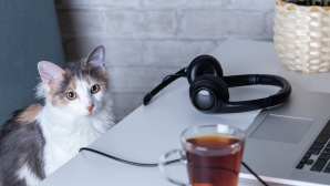 Katze mit Laptop©iStock.com/Angelina Zinovieva
