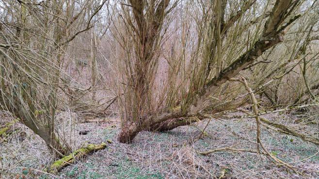 Baum mit der 108 MP Kamera©COMPUTER BILD / Janina Carlsen
