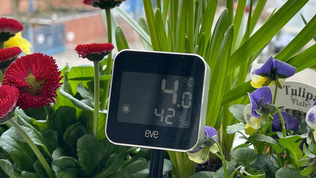 Eve Weather draußen im Blumenkasten