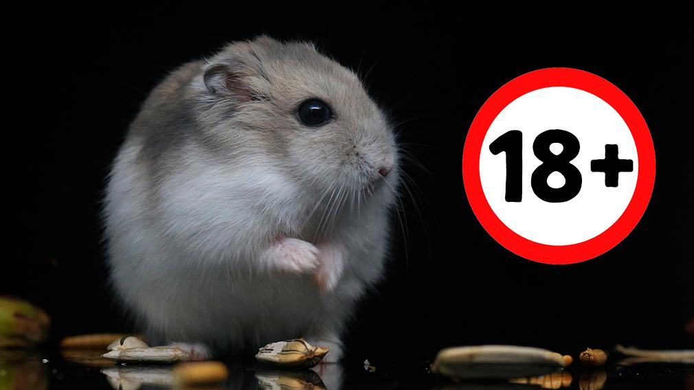 Hamster sexseite