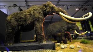 Mammut©Krafft Angerer/Getty Images