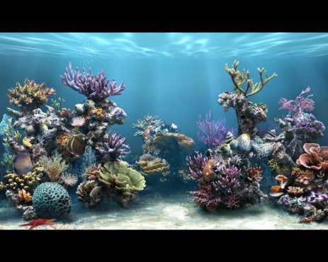 Sim Aquarium FreeTank