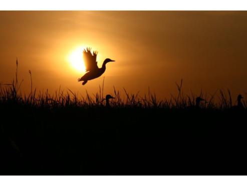 Aufsteigender Vogel im Sonnenlicht
