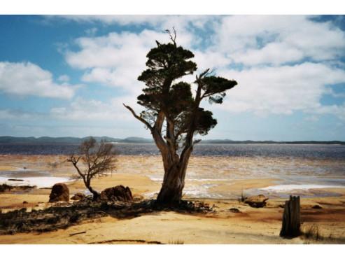 Ein Baum in der Steppe
