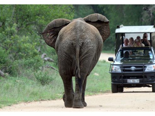Ein Elefant auf der Straße bei Gegenverkehr