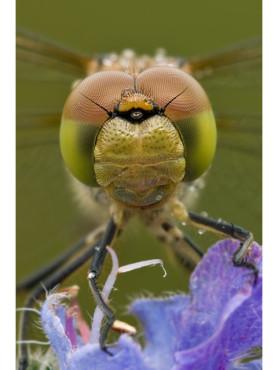 Ein Insekt auf einer Blüte
