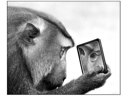 Ein Pavian betrachtet sich im Spiegel.