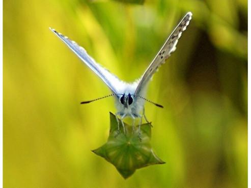 Ein Schmetterling startet von einem Blatt.