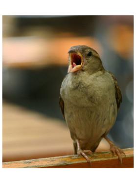 Ein Singvogel