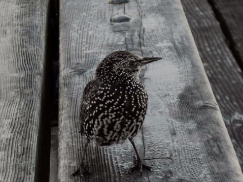 Ein Vogel auf einem Brett