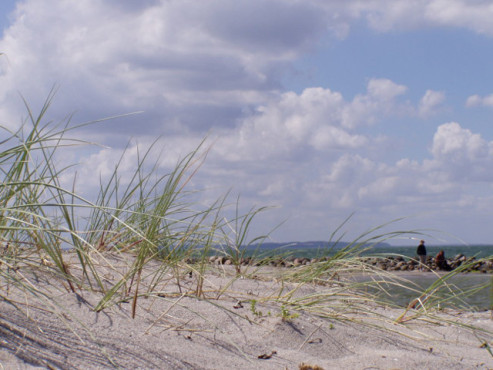 Eine Düne an der Ostsee