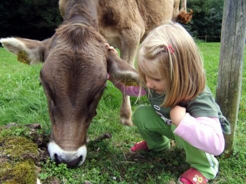Eine Kuh zusammen mit einem kleinem Mädchen