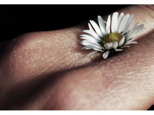Gänseblümchen zwischen den Fingern einer Hand