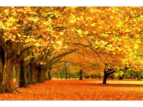 Goldgelbe Laubbäume im Herbst