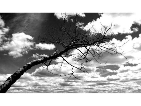 Kahler Baum vor einem Wolkenhimmel