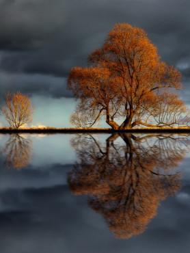 Laubbaum im Herbst bei einem dunklen, wolkenbehangenen Himmel