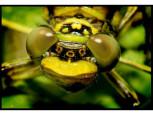 Nahaufnahme eines Insekts