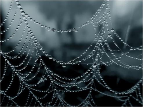 Regentropfen an einem Spinnennetz