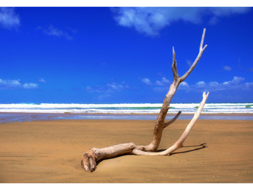 Treibholz am Meer