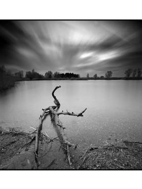 Vertrockneter Ast vor einem See