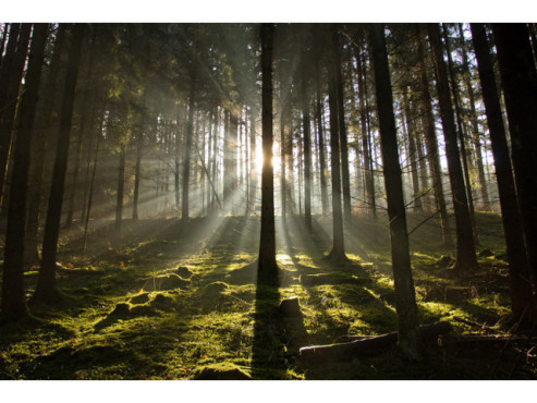 Wald beim Sonnenaufgang