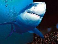 3D-Kino: Weißer Hai©CineStar