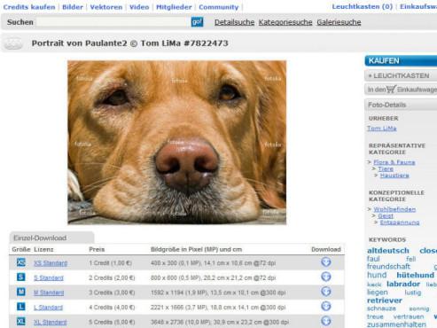 Bild von einem Hund mit Wasserzeichen