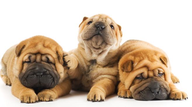 Als Hundehalter Tierdokus anschauen ©Andrejs-Pidjass-Fotolia