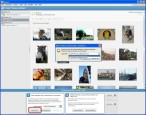 Picasa: Speicherort auswählen und Sicherungssatz bestimmen