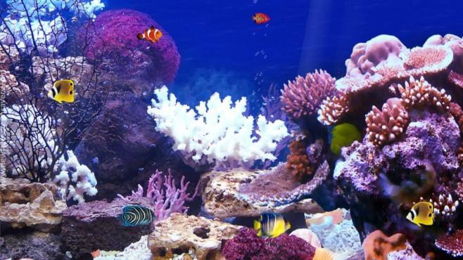 Aquarium Screensaver ©COMPUTER BILD