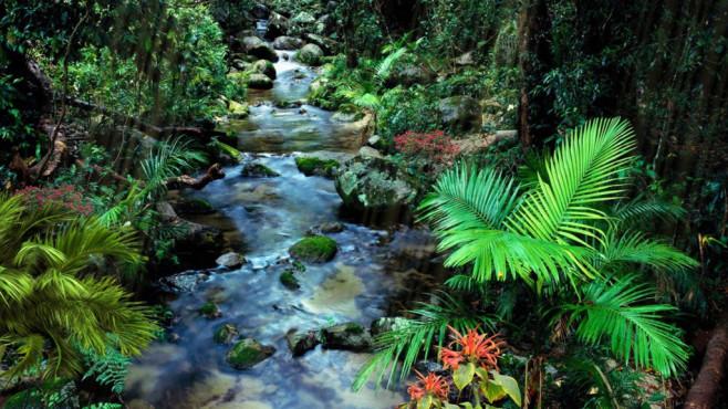 Quelle im Dschungel Screensaver ©COMPUTER BILD