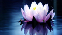Singende Lotusblume Screensaver©COMPUTER BILD