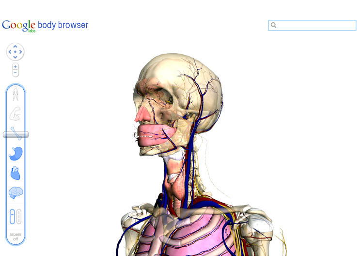 Google Body Browser: Menschlicher Körper in 3D - COMPUTER BILD