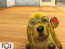 Simulation Nintendogs + Cats – Französische Bulldogge: Brille©Nintendo