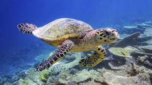 Meeresschildkröte©Google